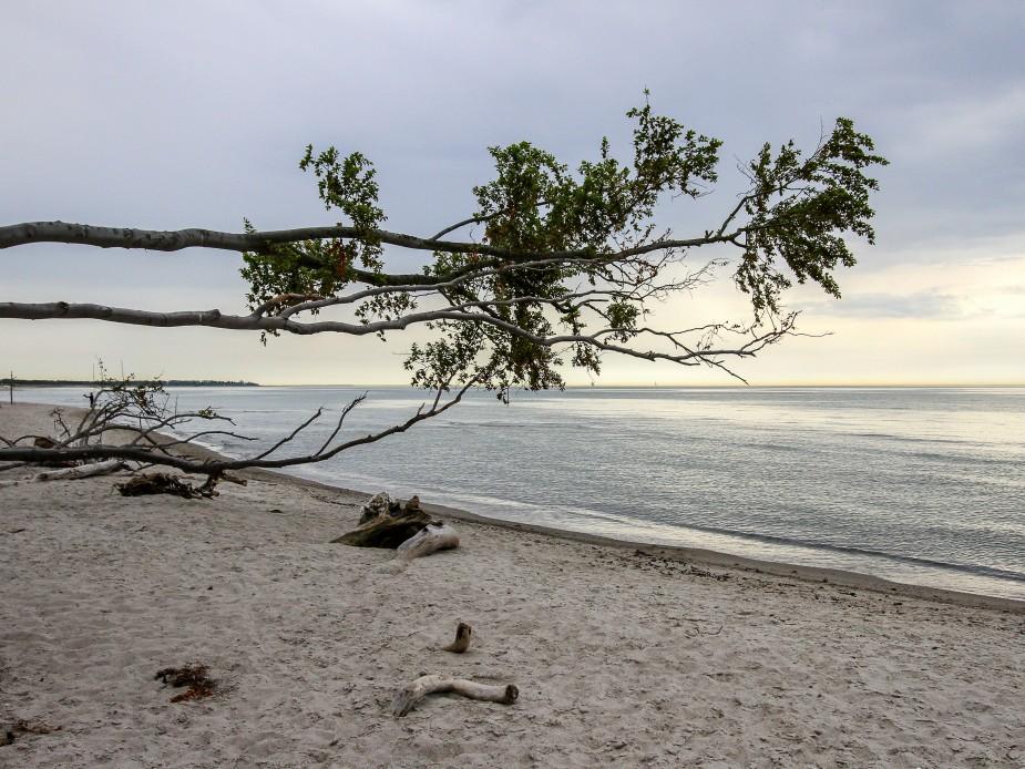Nationalpark Vorpommersche Boddenlandschaft  Weststrand Darß DE-MV