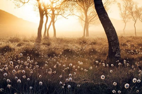 apoy-2016-meadow-stuart-stevenson