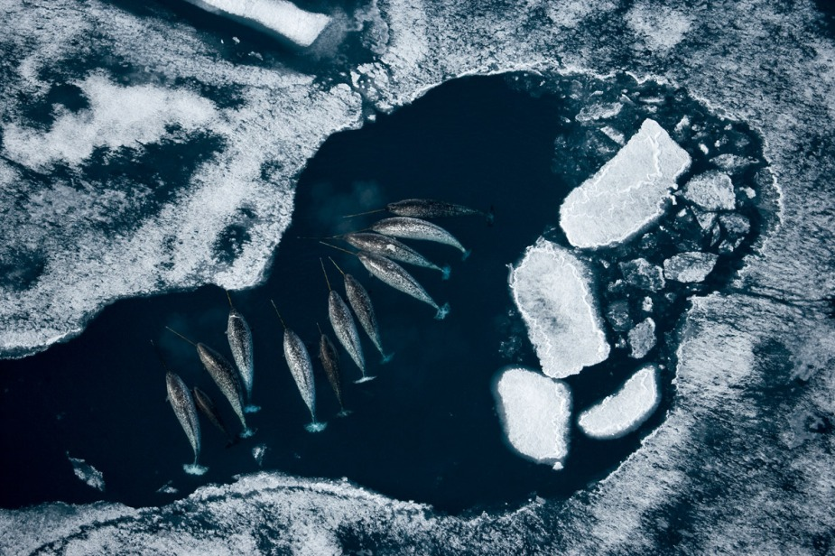 narwhal-group-aerial-closer_2015_03_10