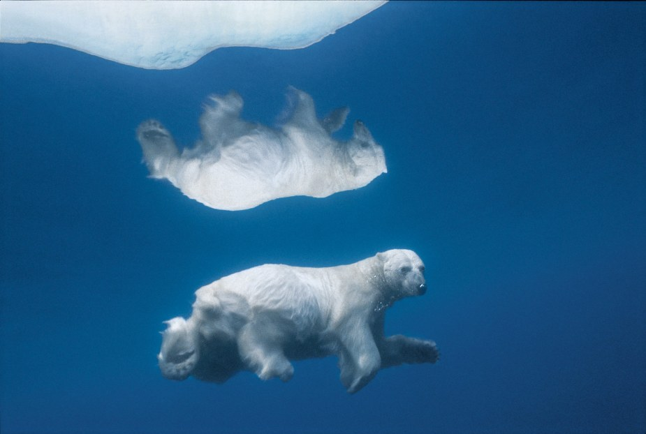 photo_by_paul_nicklen-10
