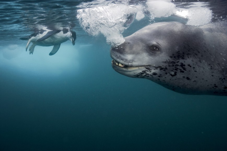 photo_by_paul_nicklen-6