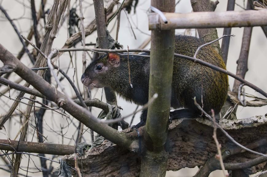 Objektivtest_Tiergarten-2-min