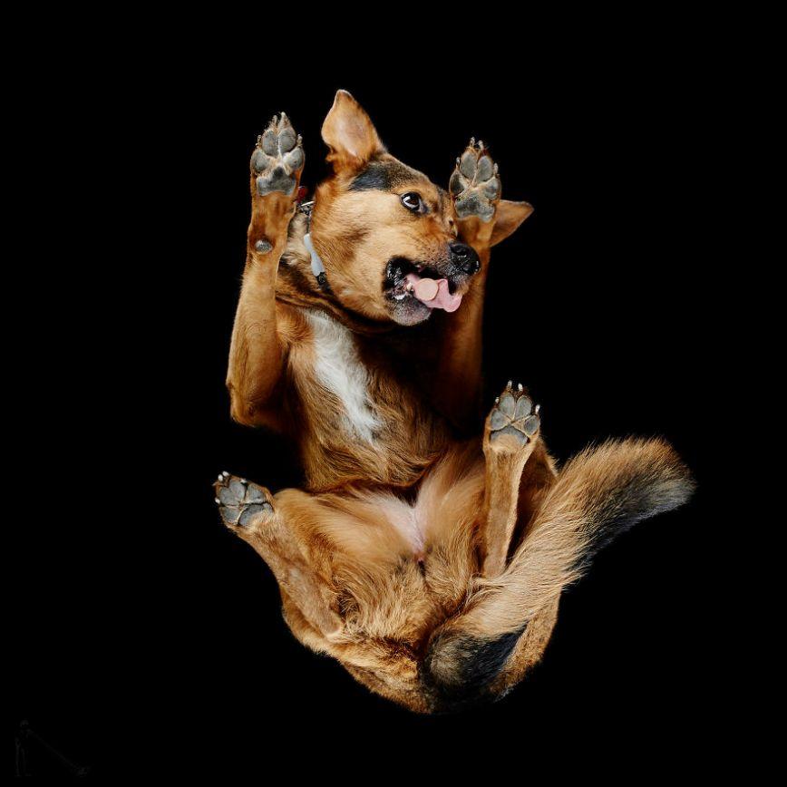 2-Under-dogs-58ec83a8daa33__880