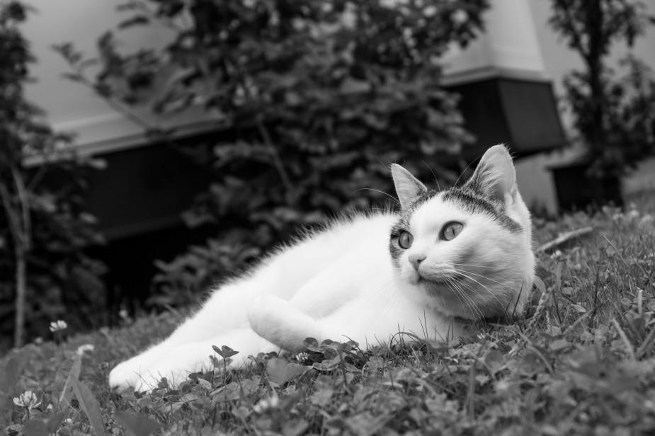Fotospaziergang_Katze-6